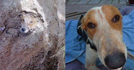這隻狗狗曾經被學校校長活埋,但她後來奮鬥活了下來並給施暴者最後悔的反擊!