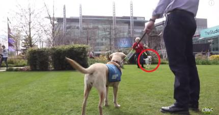7隻從小就分開的狗狗兄弟姊妹,多年後重逢都還會認出對方嗎?