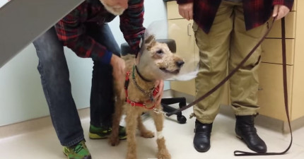 這隻失明的救援狗做了眼睛手術終於能看見他深愛的家人,我的心快負荷不了了!