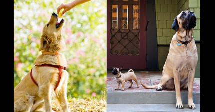 日本最新研究發現超有趣真相:狗狗選擇對哪個陌生人好其實背後都有原因的...(不是因為食物)