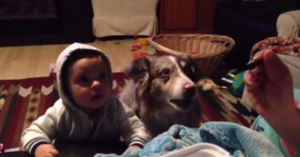 媽媽想要用美食誘惑寶寶學會說「媽媽」,但看狗狗做的事情!