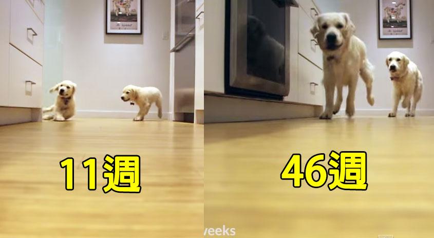 狗狗搶食物