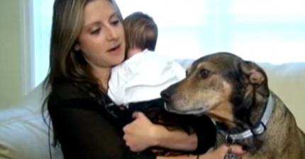 這對夫妻睡到一半被這隻領養的狗狗顫抖搖醒,才發現這是個救命的英勇之舉!