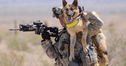 這3隻狗救了50個士兵的性命,現在該到他們要拯救3隻毛恩人了。