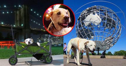 主人得知愛狗罹患不治之症以後,帶他踏上的最後旅程會讓你看得心碎流淚。