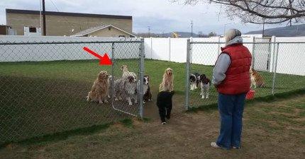 媽媽點到名的狗狗才可以出來吃飯,每一隻都超有秩序...除了最後一隻...