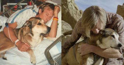 10年前狗狗陪主人度過癌症低潮,10年後狗狗得了癌症主人用最美方式回報他