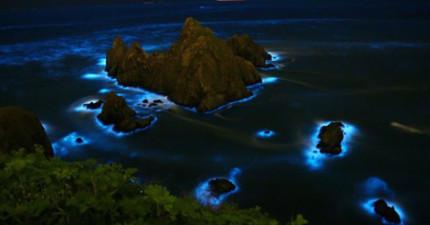 唯有天時地利人和,你才能看到海洋流下最絕美的閃爍淚水。