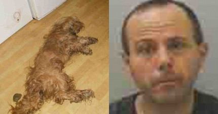 這名男子的狗被打到奄奄一息倒臥糞便旁,他視而不見的輕蔑態度最後得到了最正義的懲罰!