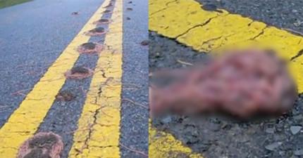 馬路上出現一坨一坨一近看就會讓人想小嘔吐的義大利麵,連科學家都無法解釋!