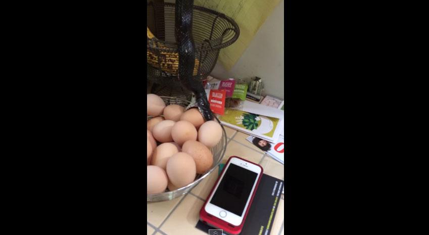 當他們回家的時候,忽然發現到一條黑色東西慢慢的往他們的一籃雞蛋下降...太恐怖了吧?!