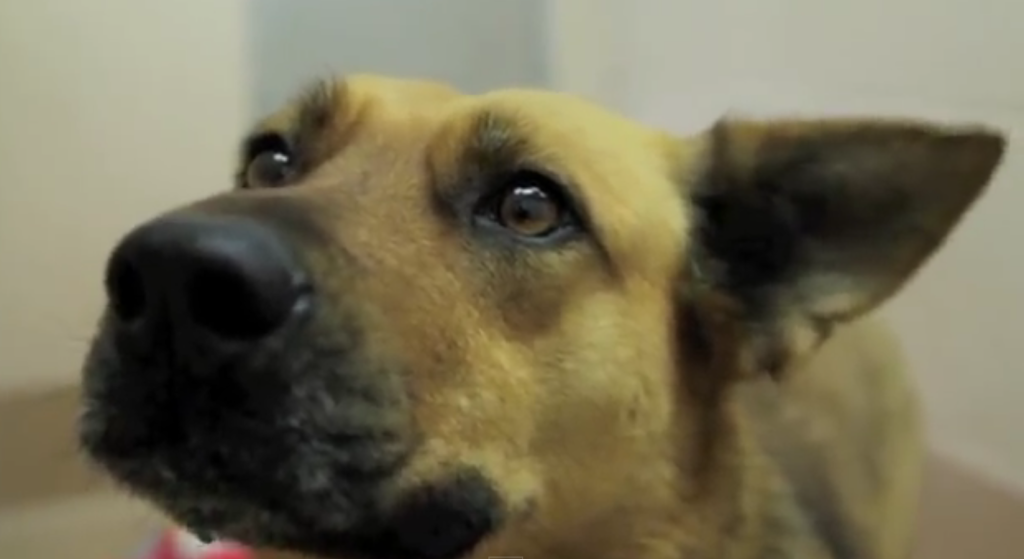 這隻狗狗走失了7個月,但最後因為一個最重要的關鍵要素才找到回家的路!