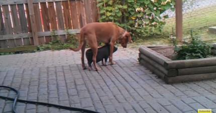 這隻狗狗一直懷疑有東西一直跟著他...太可愛了,拜託來跟蹤我謝謝!