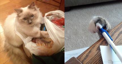 14隻以為主人不會那麼早回家而被「貓贓俱獲」的現行犯貓咪!