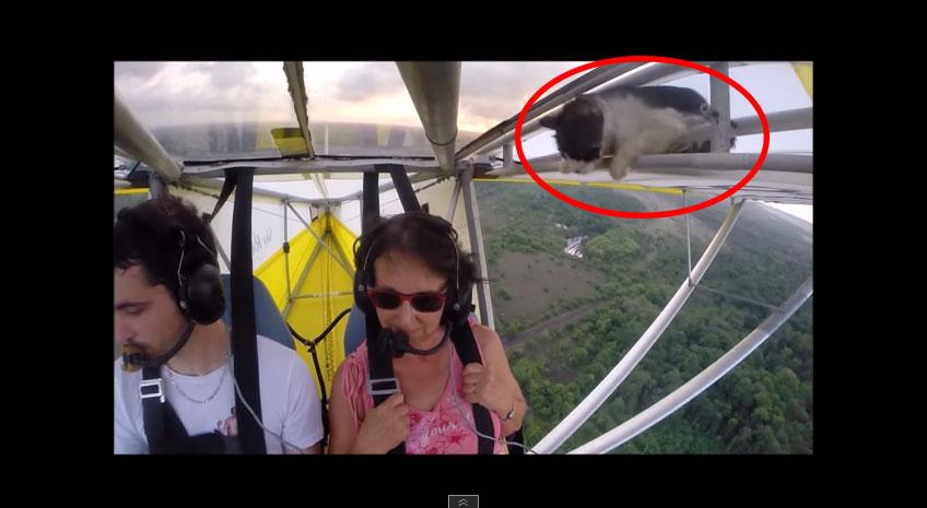 他們正在享受空中飛翔不要打擾他們...但才飛了40秒發現,飛機上怎麼有隻貓啊?!