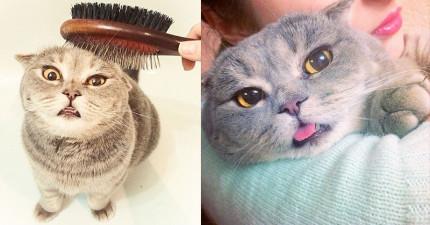這隻很喜歡「把舌頭放出來見客」的貓咪,準備用17張照片攻破你內心最後一道防線!