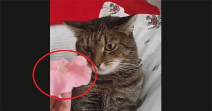 這個人發現到只要把一朵花放在貓咪的頭上,貓咪的作業系統就會出現藍螢幕...