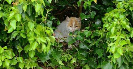 他們在樹叢聽到了微小的聲音,撥開才發現這萌殺所有人的一家人!