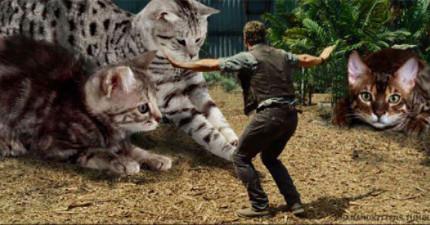 如果《侏羅紀世界》恐龍變喵喵 快點來撲我吧現在就來!