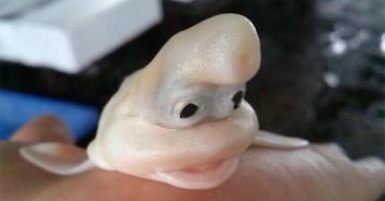 網友在日本魚市直擊這條「長相超友善」的生物,其他角度更讓我相信神奇寶貝的存在!