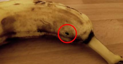這名男子才要吃香蕉但發現表皮在膨脹起伏,洞口越來越大最後猛然竄出一隻...*尖叫*