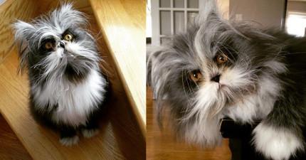 這隻「天生毛髮長超快超多」的超帥貓咪,準備用他超頹廢的外表強迫你愛上他!