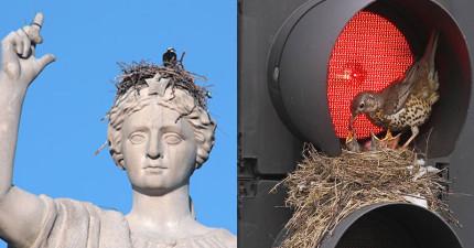 19個最詭異的鳥媽媽築巢地點,竟然荒謬到很可愛的境界了!