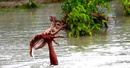 男孩在暴漲河水中看到險遭溺斃的小鹿,立刻捨命跳進水中單手堅毅地舉著...