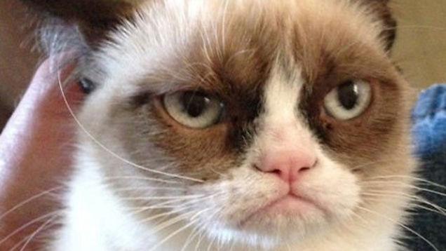 網購實際商品小的可憐 媽媽讓貓咪「實穿」嗆爆店家!