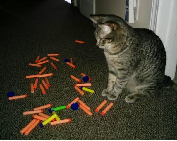 13個「失竊案」證明:若你一直找不到家裡東西,先去質問你的貓吧!