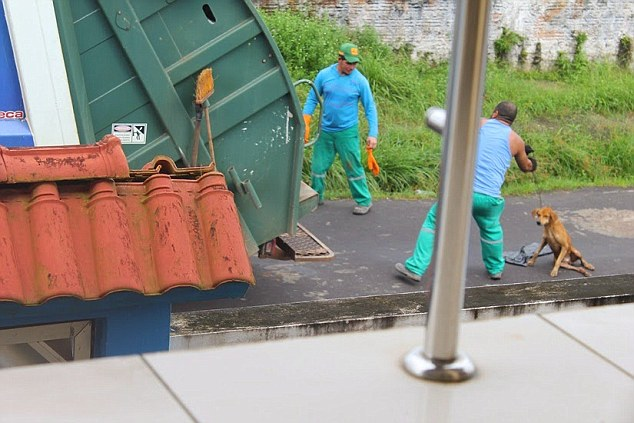 網友目擊一位清潔員以垃圾車先撞傷狗狗,然後乾脆把狗丟進...我講不下去了。