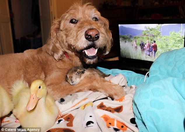 這家人養了這超奇妙的寵物組合,生活照夢幻到我要打電話請迪士尼來取材了!