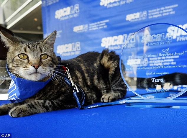今年「年度英雄狗狗獎」居然頒給這隻貓咪? 看完影片就馬上懂了...
