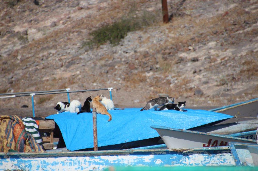這對夫婦出國度假被34隻流浪貓狗圍住,他們接下來的義舉會讓你知道世間仍有很多愛!