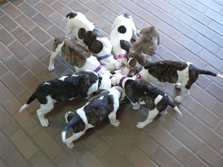 5個經科學驗證的「終極狗狗食安準則」:只有這25個狗食品牌能讓你的狗狗陪你走更長的路!