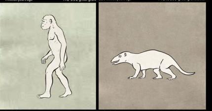 用1分鐘看完人類的5.5億年精采進化過程!