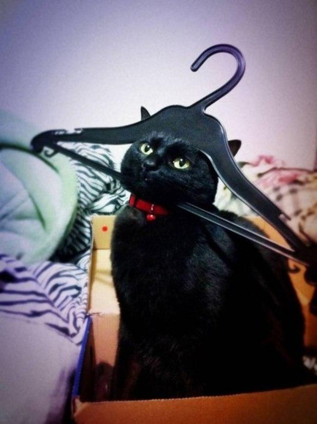 12隻對你很失望的貓咪 你竟然先拍照才拯救他們!
