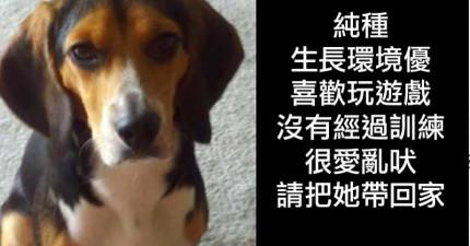 男子因為女友不喜歡他的狗因此他登出這則「棄養廣告」...網友狂讚!
