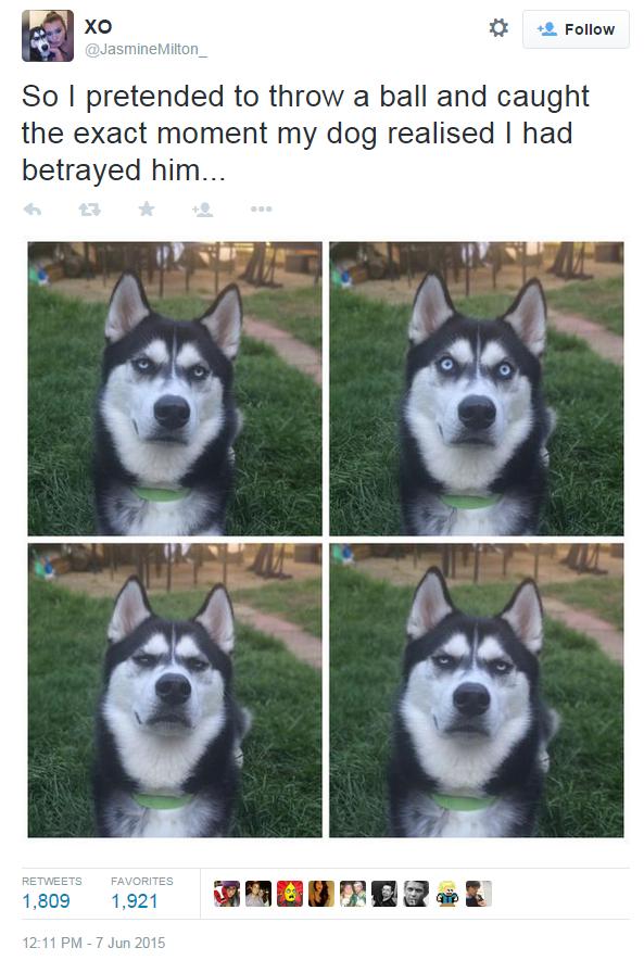 這隻狗狗發現自己被主人騙了以後,下一秒他的超不爽表情主人趕快按下快門!