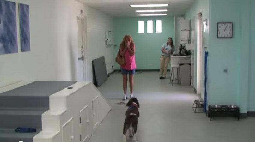 當她把愛犬送到復健診所時,她已經沒有期望癱瘓的他可以再走路了。但當她到了診所後,她的眼淚不自禁地流下來了...