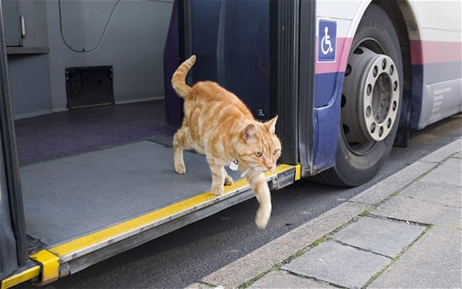她有天找不到自己的貓,才知道貓咪早就習慣搭著公車到處玩、還受到眾人禮遇?!