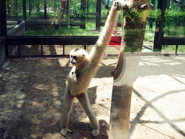 20隻「超會擺POSE」的性感動物們,我相信他們絕對知道照相機是用來幹嘛的!