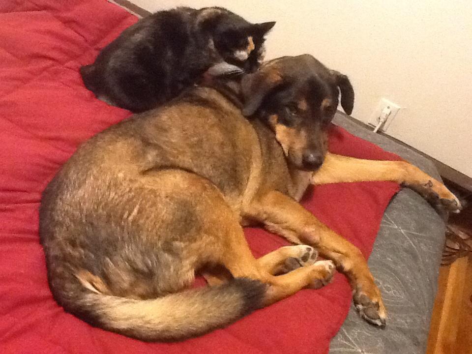 這隻狗狗因為癌症過世後,他的貓咪妹妹哀悼的方式讓主人看了忍不住流下眼淚...
