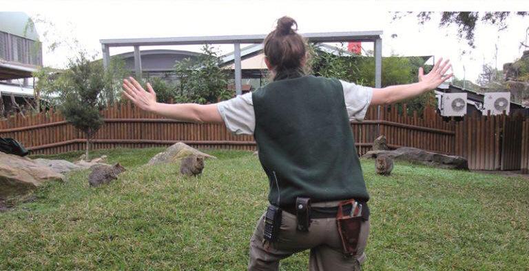 在《侏羅紀世界》馴服迅猛龍那一幕爆紅後,很多的動物園管理者也趕緊拍攝他們自己的「超驚險版本」!
