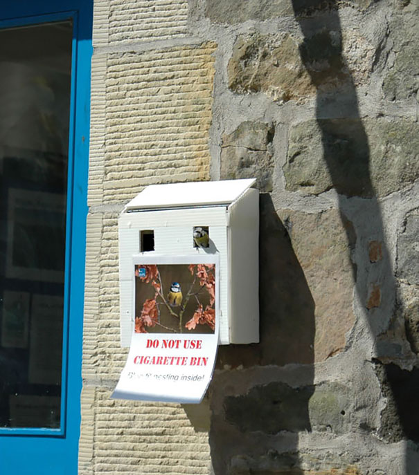 bird-nests-unusual-places-11__605