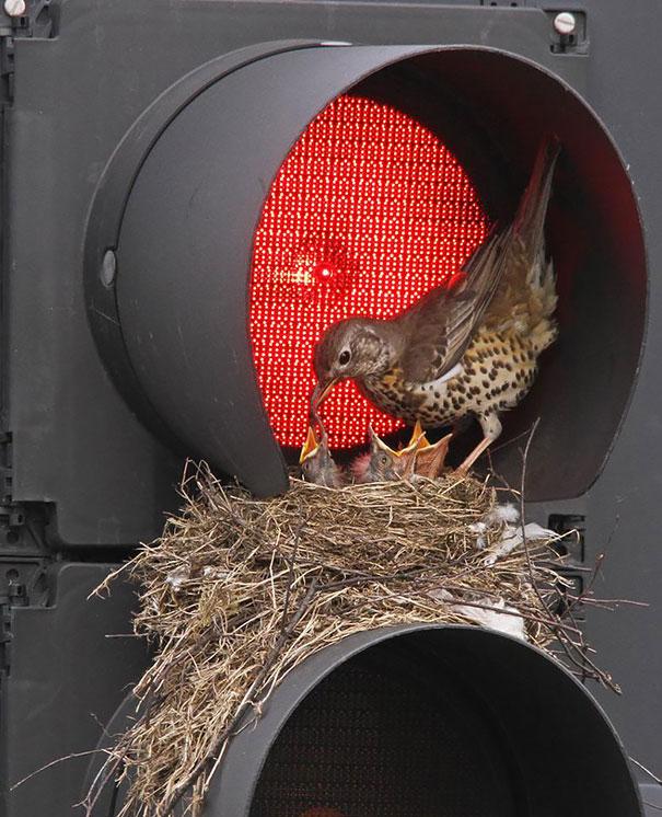 bird-nests-unusual-places-12__605
