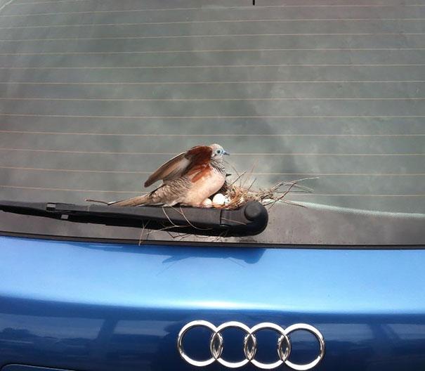 bird-nests-unusual-places-13__605