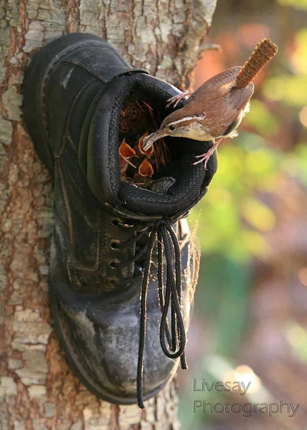 bird-nests-unusual-places-16__605