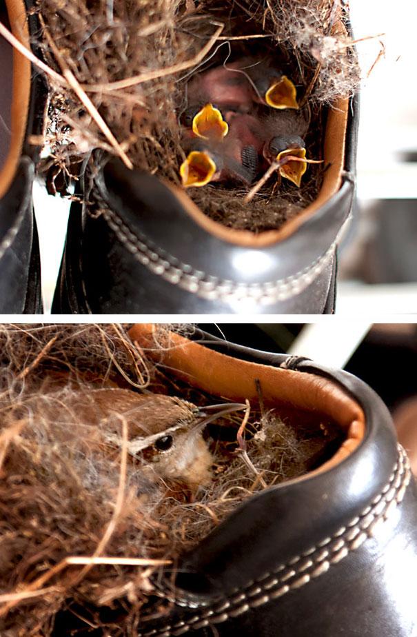 bird-nests-unusual-places-17__605