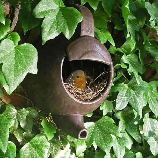 bird-nests-unusual-places-18__605